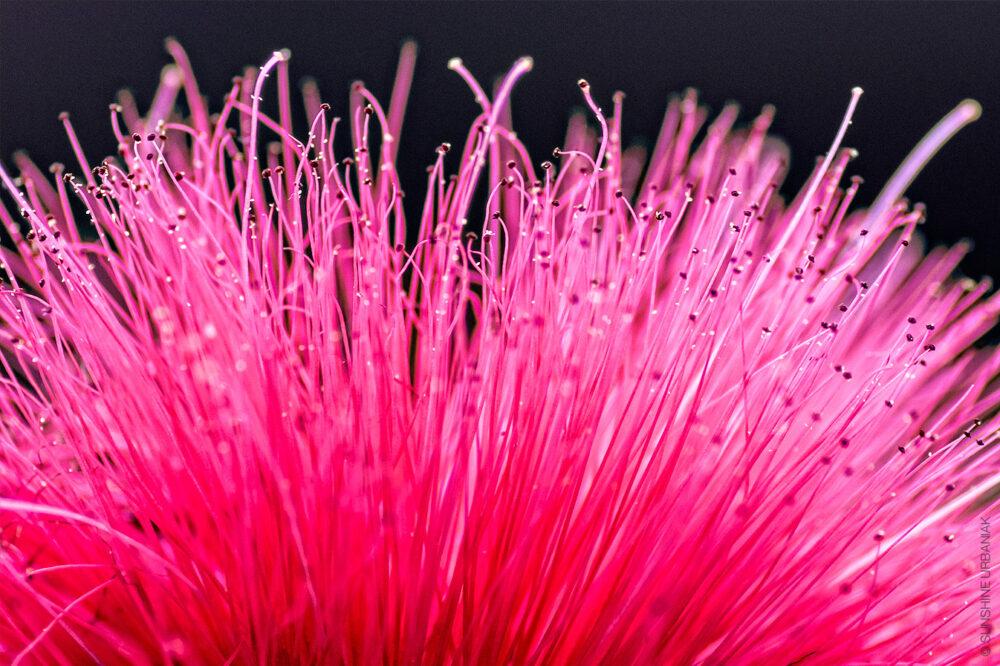 macro flower photography