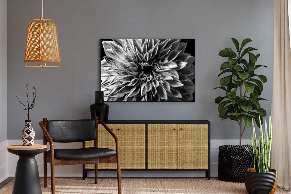 dahlia flower photography